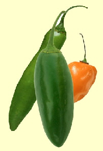 THREE-PEPPERS-Y-288